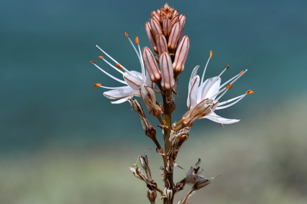 flora-4209568_1920